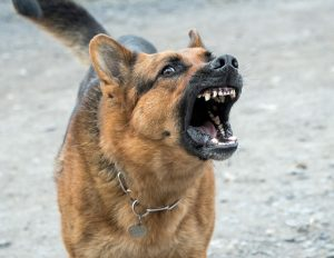 protéger sa maison avec un chien