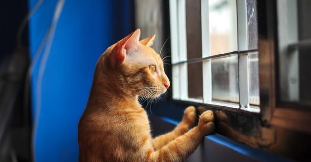 Les critères pour choisir une assurance santé chat