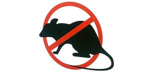 Les dangers de l'utilisation de poison pour rats